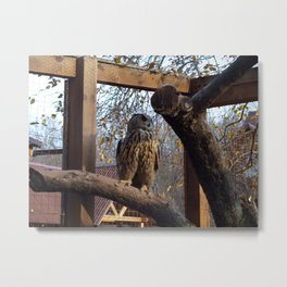 Owls and owls in the cage Metal Print