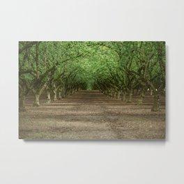 Tree Orchard Metal Print