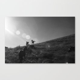 Horses Cantering Canvas Print