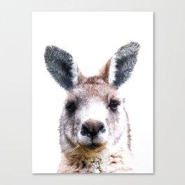 Kangaroo Portrait Canvas Print