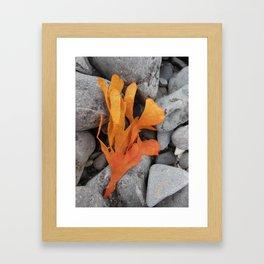 Orange  Seaweed (1) Framed Art Print