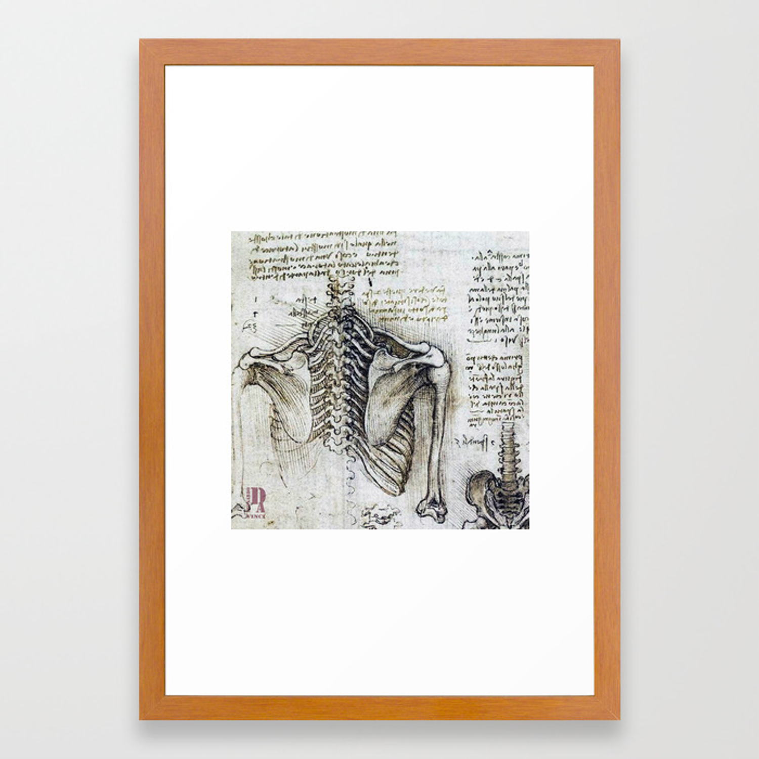 Leonardo Da Vinci human body sketches - skeleton Framed Art Print