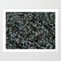 Last Frost of the Season Art Print