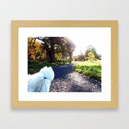 Ivanna the Samoyed Framed Art Print