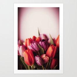 Fresh Tulips Art Print
