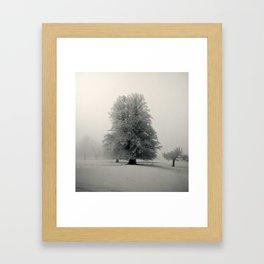 White beech Framed Art Print
