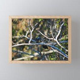 Anhinga on a Branch Framed Mini Art Print