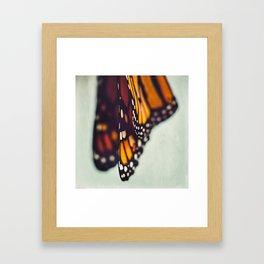Monarch Study #5 Framed Art Print