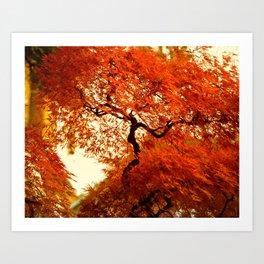VIBRANT ORANGE JAPANESE FALL MAPLE TREE Art Print