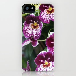 Longwood Gardens Orchid Extravaganza 60 iPhone Case
