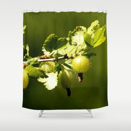 Green and unripe gooseberry on a green, blurry background Shower Curtain