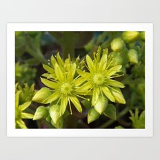 Blooming Green Art Print