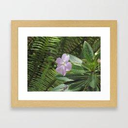 Jardín Botánico de Quito, Seis Framed Art Print