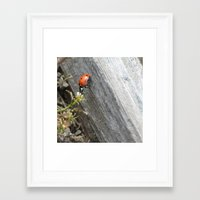 ladybug Framed Art Prints featuring Ladybug by Zen and Chic