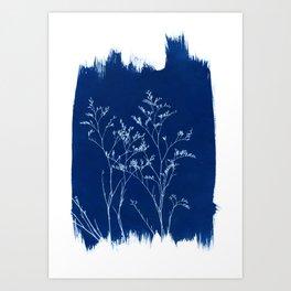 Limonium Cyanotype, Herbal Sunprint, Solar Herbalism Art Print