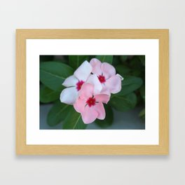 Blooming Beautiful Pink Impatiens Flowers Framed Art Print