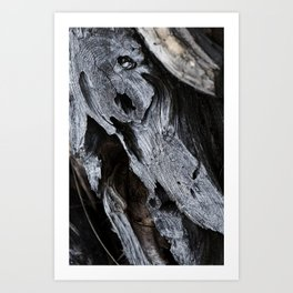 300 Year Old Tree Bark 2 Art Print