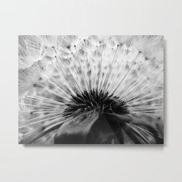 Inside A Dandelion Metal Print