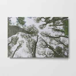 In To The Woods Metal Print