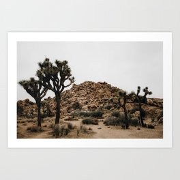 Joshua Tree / California Desert Art Print