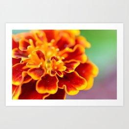 Dreaming in Orange Art Print