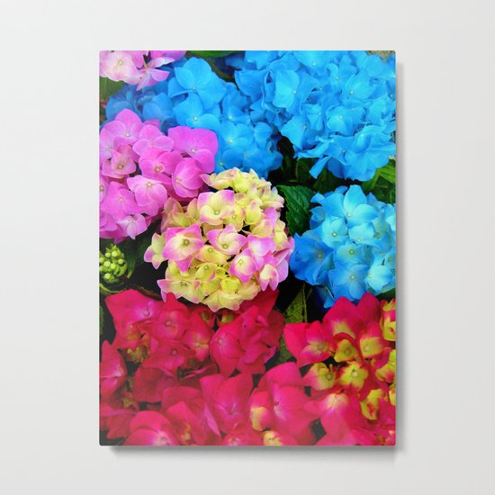 Red Blue Rose Flower Blossoms Hydrangeas Metal Print