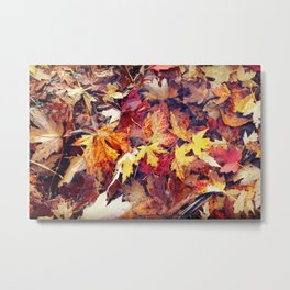 Maple Leaves Floating on Water. Autumn, Fall, Nature Metal Print