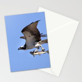 Watercolor Bird, Osprey 08, Yellowstone, Wyoming Stationery Cards