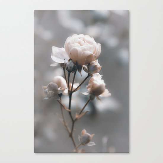 Bokehlicious pink Rose at Backlight - Roses and Flowers Canvas Print