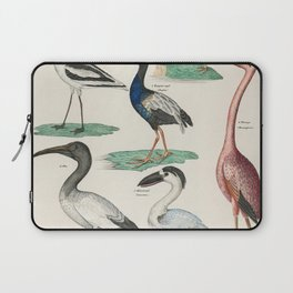 Okens Allgemeine Naturgeschichte by Lorenz Oken published in 1843 a lithograph of pied avocet and oy Laptop Sleeve