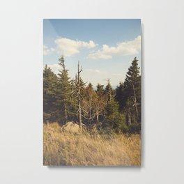 Brocken Mountain Trail Metal Print