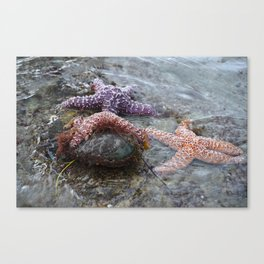 Sea Stars (starfish) chilling by Aloha Kea Photography Canvas Print