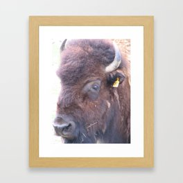 Buffalo Bill Framed Art Print