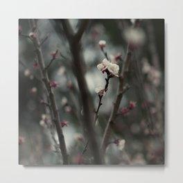 Pink White Flower Tree Metal Print