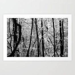 Forest (Pennsylvania) Art Print