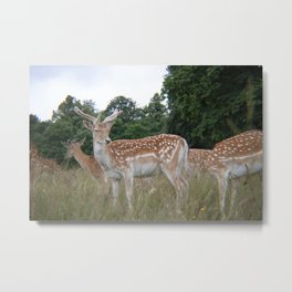 Leader of the Fawns Metal Print