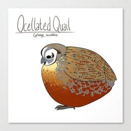 Ocellated Quail Canvas Print