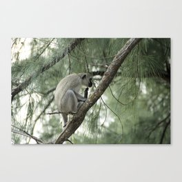 Monkey Itch Canvas Print