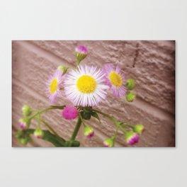 Urban Flower Canvas Print