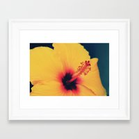 hibiscus Framed Art Prints featuring Hibiscus by MSG Imaging