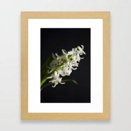 Hyancinth Framed Art Print
