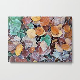 Autumn Frost Metal Print