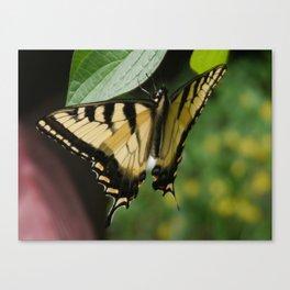Old World Swallowtail Canvas Print