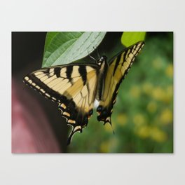 Old World Swallowtail Canvas Print