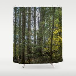 The Woods Around Clear Lake Shower Curtain