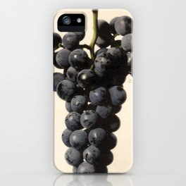 Vintage Concord Grapes Illustration iPhone Case