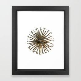 Feather Star Framed Art Print