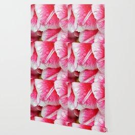 Raindrops on pink tulip petals Wallpaper