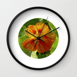 nasturtium bloom XI Wall Clock