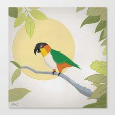 Black-Headed Caique Parrot Canvas Print